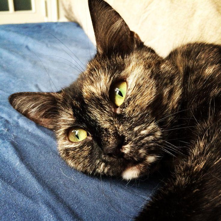 Alba the cat