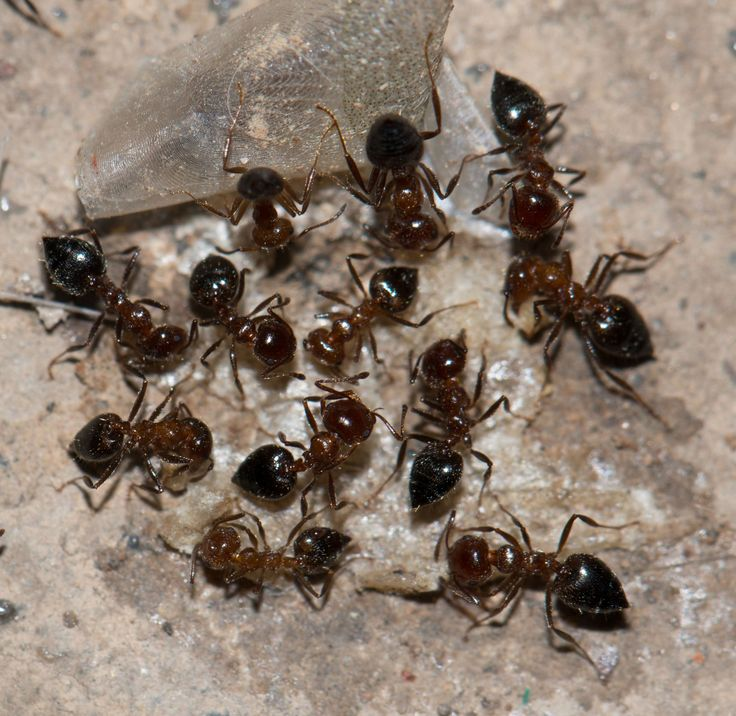 How to Identify Different Ant Types | Terminix Blog