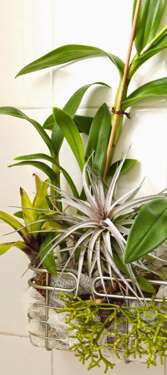 19 Best Buy Air Plants Wholesale Florida Nursery Images On