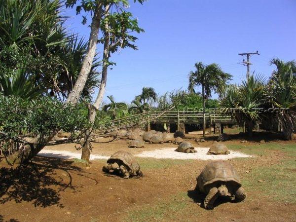 На юге острова расположен еще один заповедник – Ла Ваниль. Ничего общего с одноименным растением у парка нет. Задуман он был как питомник для разведения мадагаскарских крокодилов, но со временем превратился в зоопарк. Отличает от других зоопарков его то, что ни в одном другом зоопарке вы не встретите гигантских черепах, совершенно привольно гуляющих по территории. Да и с крокодилами здесь можно познакомиться довольно близко. Также тут есть много других животных: кайманы, игуаны, звездные…