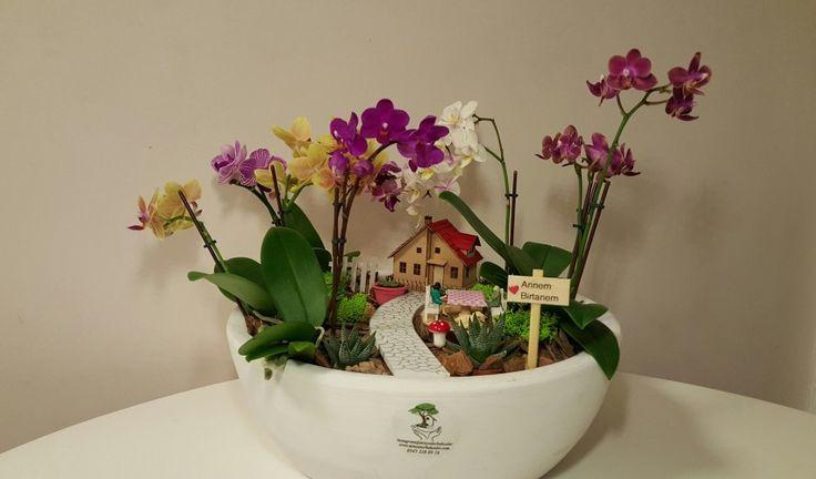 Canlı Minyatür Bahçeler | Minyatür Bahçeler Ile En Şık Tasarımlar Sizlerle