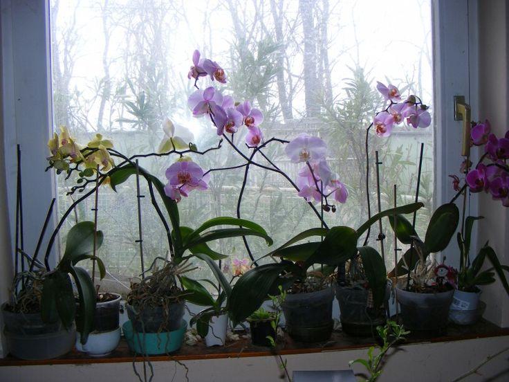 Orchids :-)
