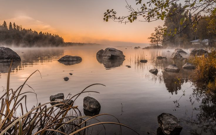 jezioro,  Kamienie, Trawa, Drzewa, Mgła