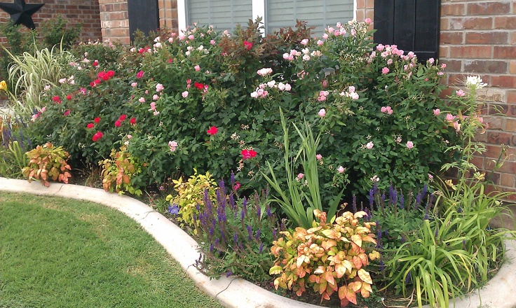 Front Yard Landscaping Roses : Knockout roses gardening ideas landscaping front yard