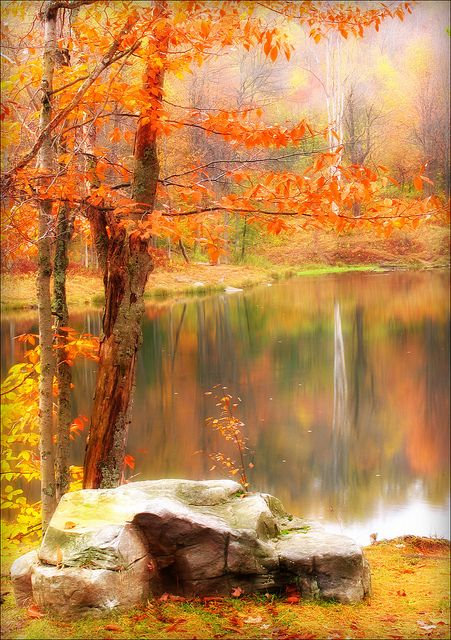 ~~A colorful dream ~ Science Lake, Allegany State Park, New York by kuddlyteddybear2004~~