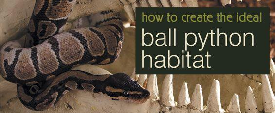How to Create the Ideal Ball Python Habitat