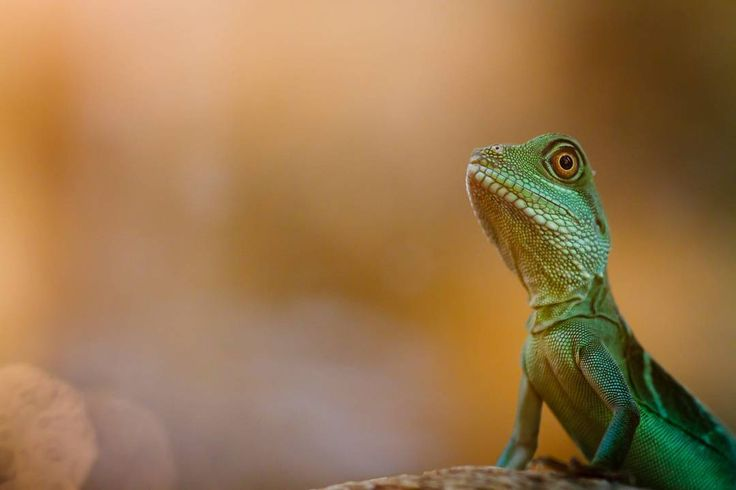 High Resolution at https://500px.com/dstphoto   #amazing #instacool #webstagram #style #fine art #canon #france #awesome #green # water #nature #pastel #canon📷 #macro #workshop #dstphoto.eu #stage #lizard #colors #nakedplanet  #ourplanetdaily