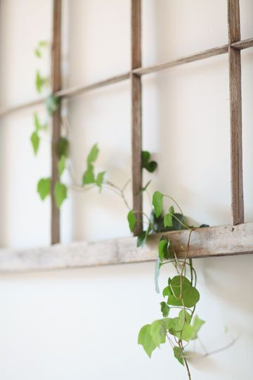 Indoor Plant Growing On An Old Window Frame Could Also