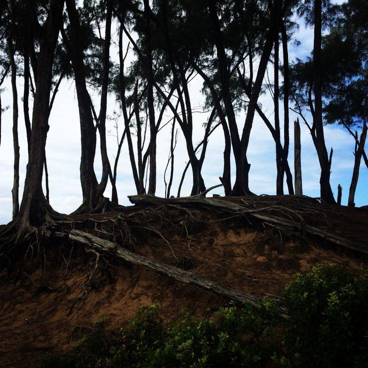 Sodwana Trees