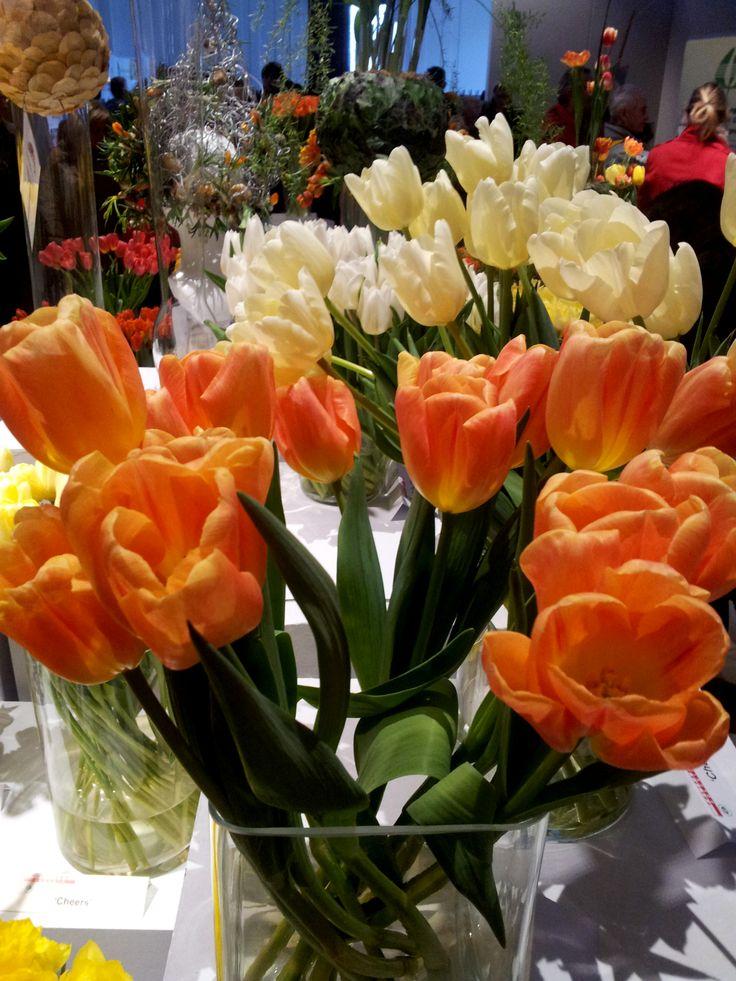 Switch tulips