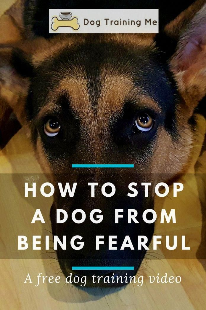 Plentiful Replied Command For Dog Training Click This Over Here Now Dog Training Aggressive Dog Dog Training Obedience