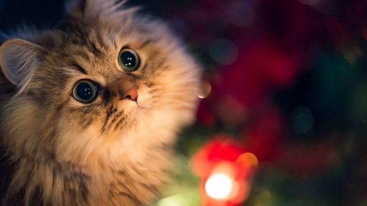 Пост невероятной кошачьей красоты