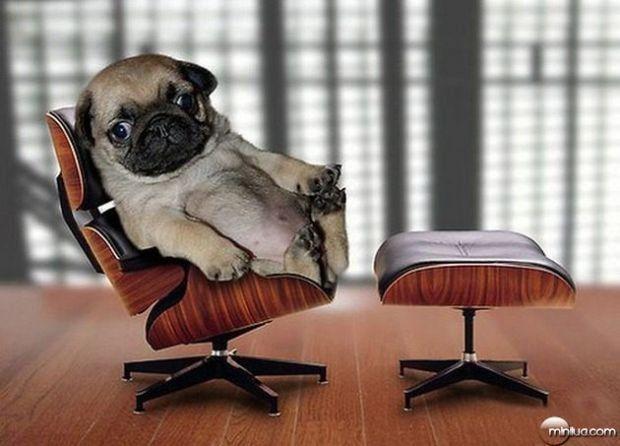 psicologia canina, como o cão se comporta, adestramento de cães, cães e seu comportamento, treinamento de cães