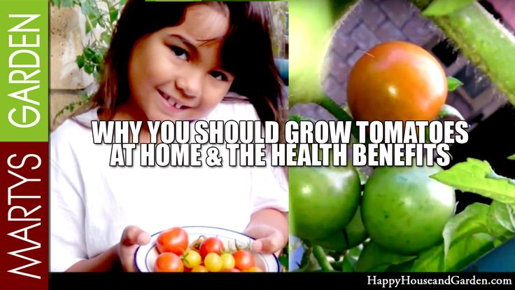 Why You Should Grow Tomatoes at Home & The Health Benefits