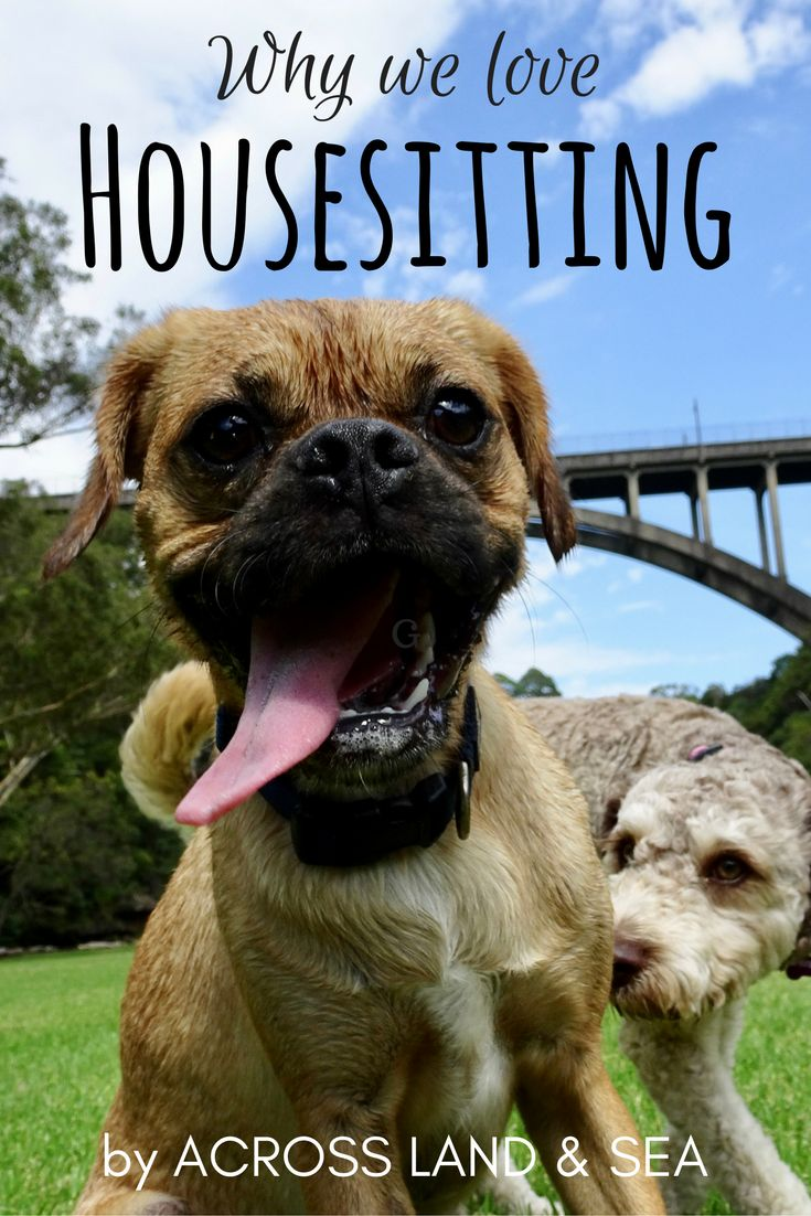 Housesitting: our experience and why we love it!