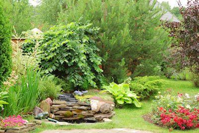 idool Tributo a la naturaleza en hermosos jardines con plantas y flores (Lugares para vivir en paz)
