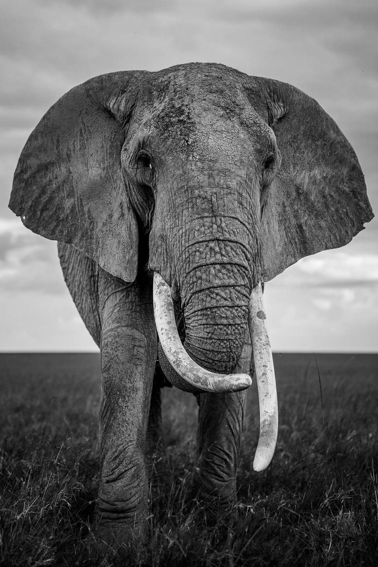 How to Photograph Elephants in Africa in 2020 Animals