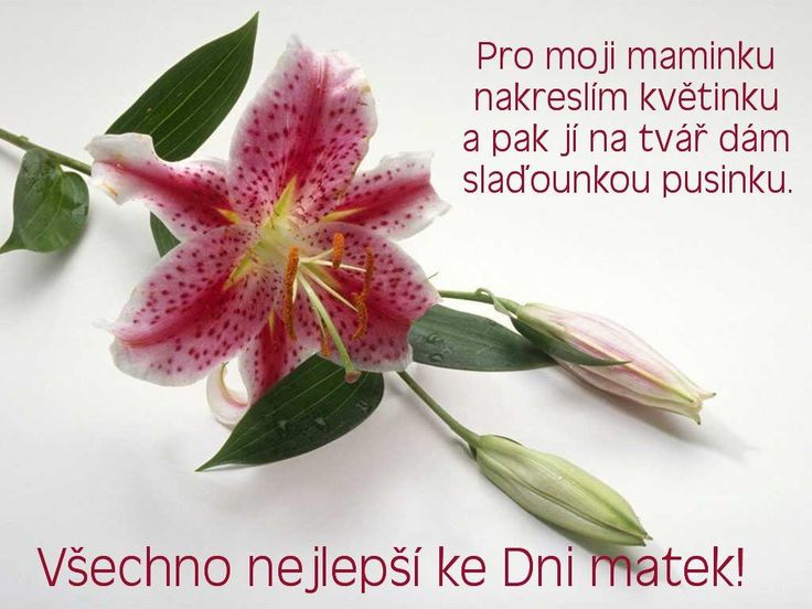 Výsledek obrázku pro básničky pro maminku ke dni matek