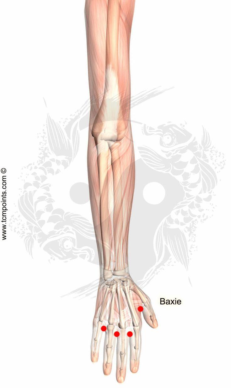 Localización del Punto: Entre los dedos de las manos. Acciones en la MTC: Relaja los tendones de la muñeca, mano y dedos. Expulsa el viento-humedad Indicaciones: Dolor, entumecimiento, rigidez, hinchazón y espasmos de los dedos. Tendinitis. Síndrome de Bi de la muñeca y los dedos. Área objetivo: Puño. Mano. Dedos. Nombre y significado del punto: …