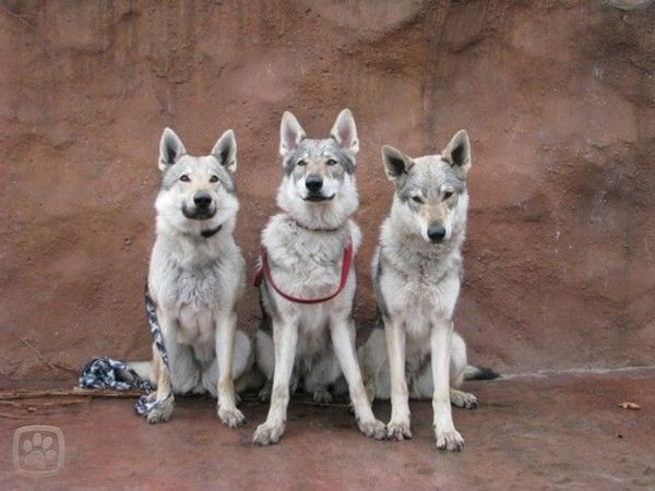 tři modelky