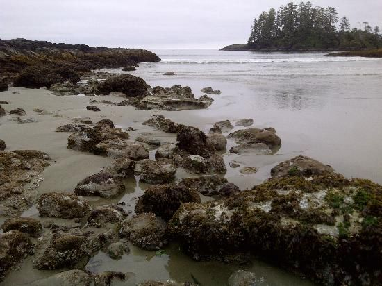 Schooner Cove, Tofino: See 277 reviews, articles, and 121 photos of Schooner Cove, ranked No.6 on TripAdvisor among 53 attractions in Tofino.