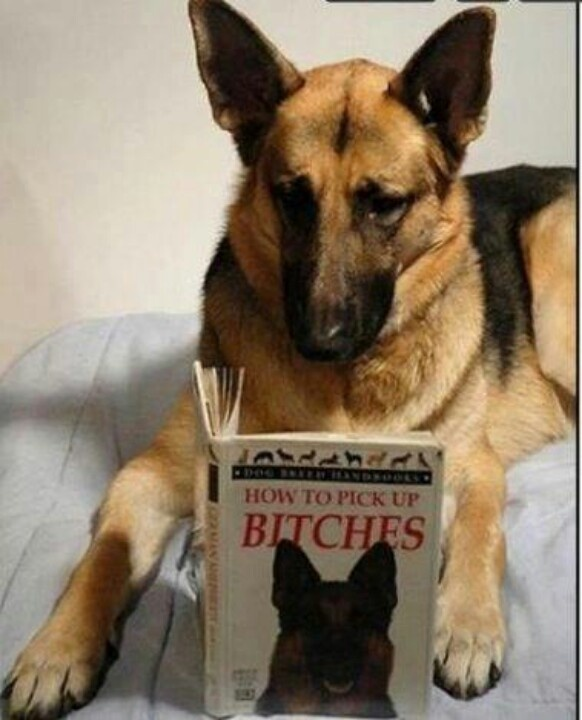 #German shepherd #funny dog pictures