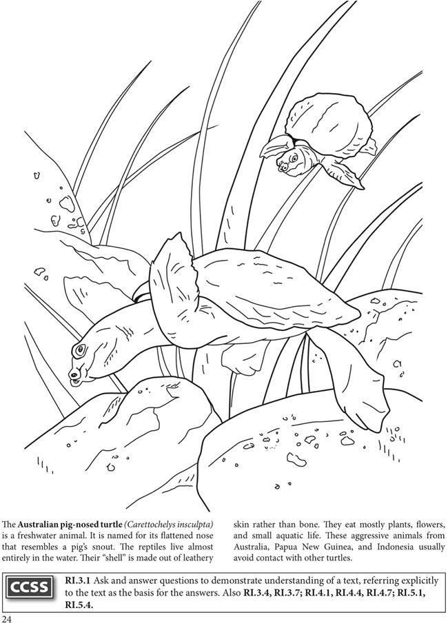 Welcome To Dover Publications BOOST The World Of Turtles Coloring Book