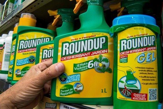 Suite au renouvellement pour 5 ans de la licence du glyphosate par la Commission Européenne, nous vous proposons de découvrir une des alternatives naturelles et sans danger qui pourrait remplacer l'herbicide cancérogène de la firme Monsanto. C'est une invention française qui plus est !
