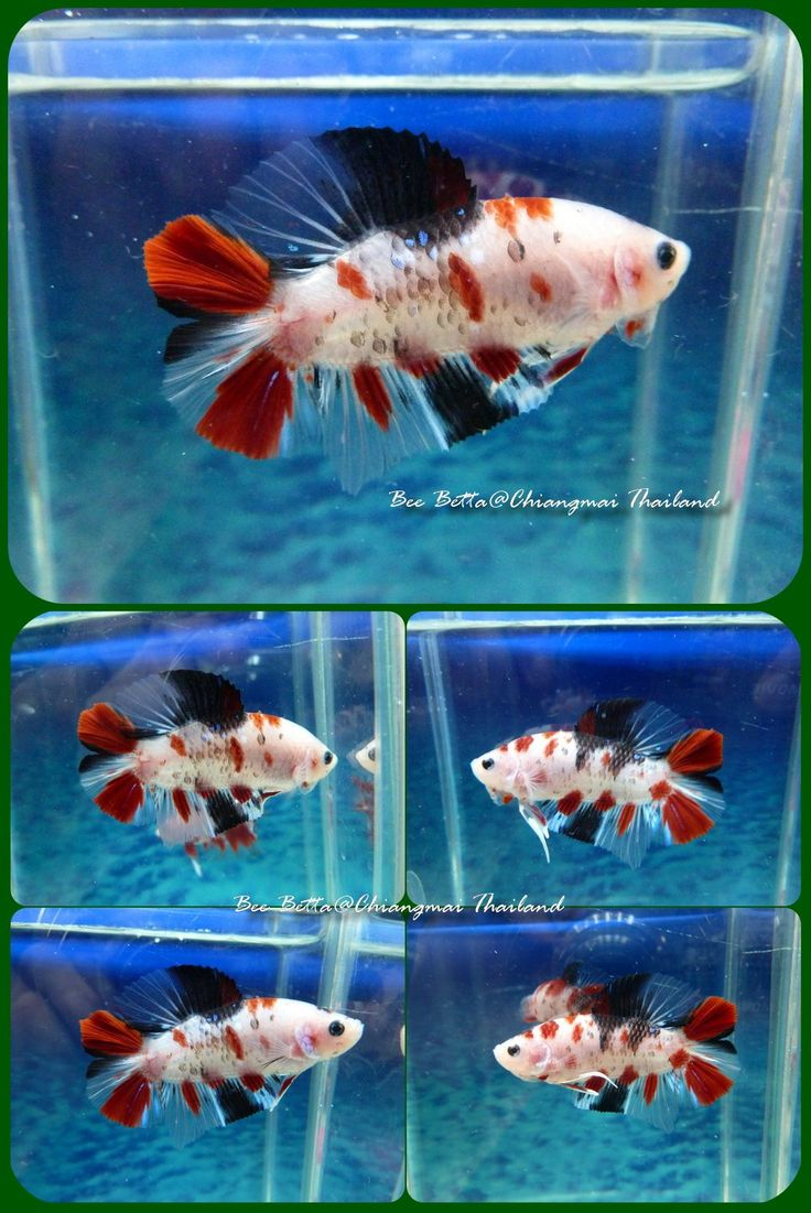 101 best images about plantas animais on pinterest for Baby betta fish