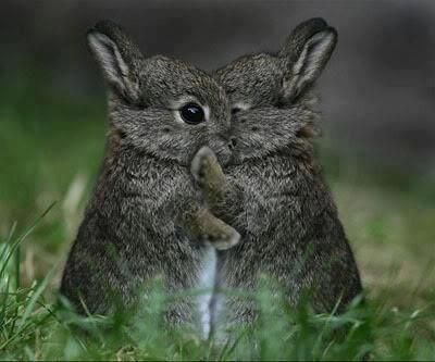 Bunny love!!!! Awww, how sweet? Hugs and kisses!!!!