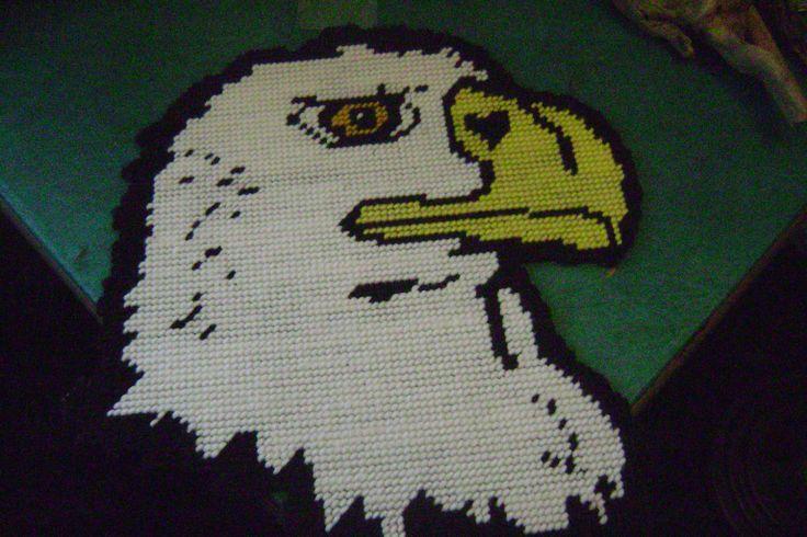 bald headed eagle