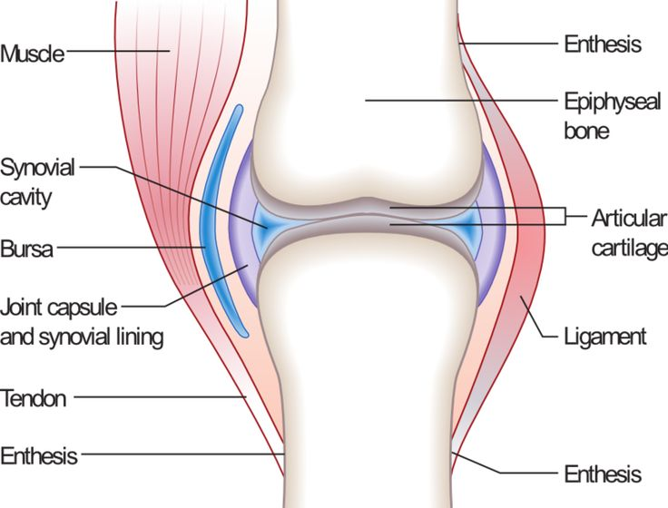 SYNOVIAL JOINT ➡ aka diarthrosis is most common & most movable type of joint. As with most joints, synovial joints achieve movement @ point of contact of articulating bones. The main structural differences between synovial and fibrous joints are the existence of capsules surrounding the articulating surfaces of a synovial joint and the presence of lubricating synovial fluid within those capsules (synovial cavities).