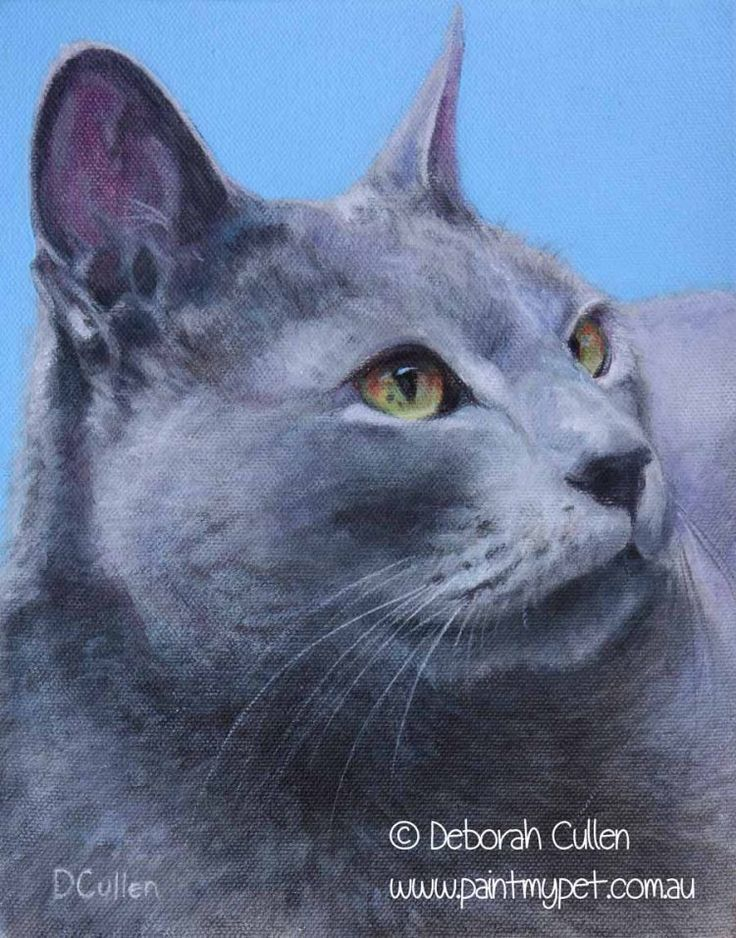 Alexander, Russian Blue Cat Acrylic on canvas