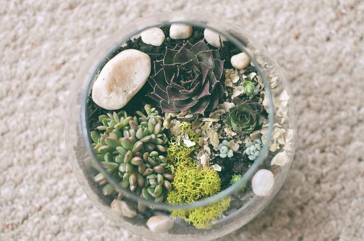 succulent terrariums for sale 🌵- they're a great gift for someone or something to add some greenery to your life. 🌱 . . . . . . . . . . . . . . . . . #aliciasflorals #succulents #terrarium #cactus #houseplant #succulentobsession #greenthumb #blackthumb #victoriabc #shoplocal #yyj