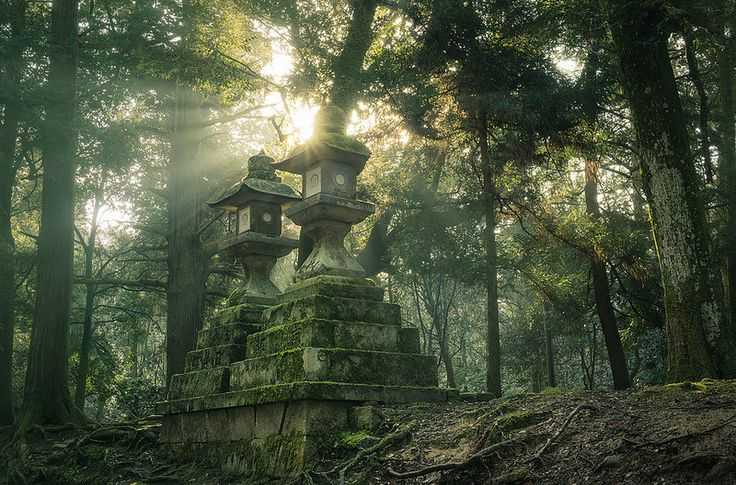 Kasuga Forest | Stone lanterns at Kasuga Grand Shrine, Nara.… | Flickr