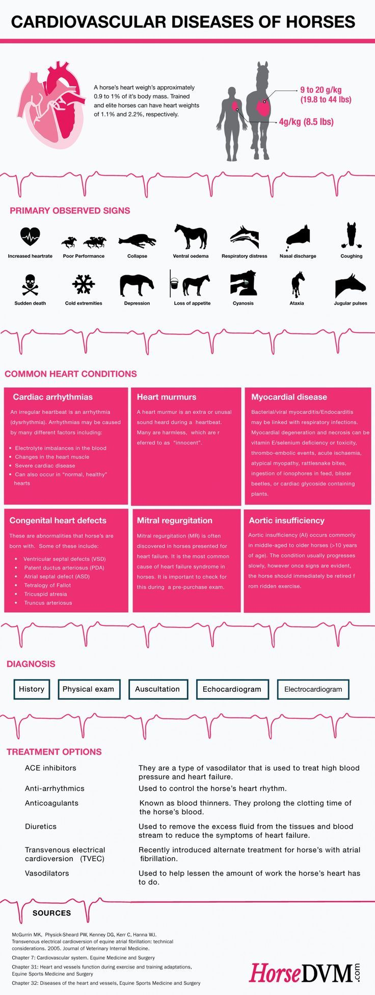 Cardiovascular Diseases of Horses Infographic by HorseDVM.