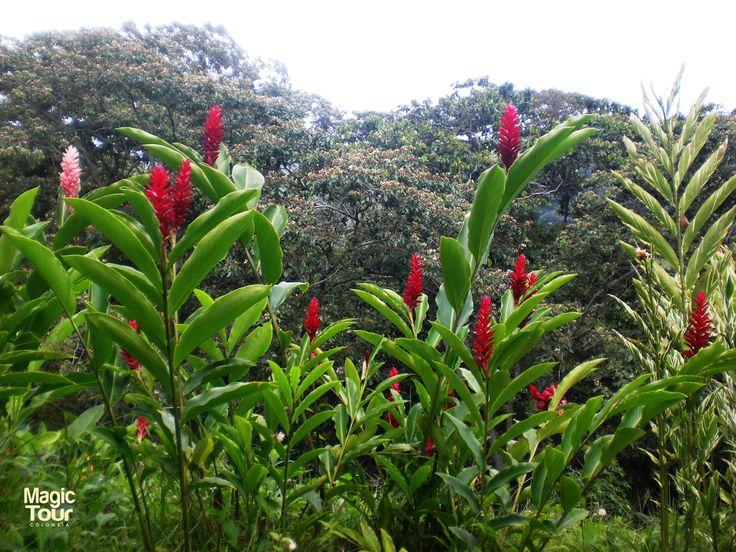 #WeTakeYouThere #adventure #colombia #travel #tourism #welovetravel #minca #sierranevada #aventura #montaña #mountain