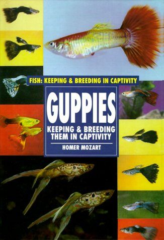 327 best super guppies bettas images on pinterest for Lifespan of a betta fish in captivity