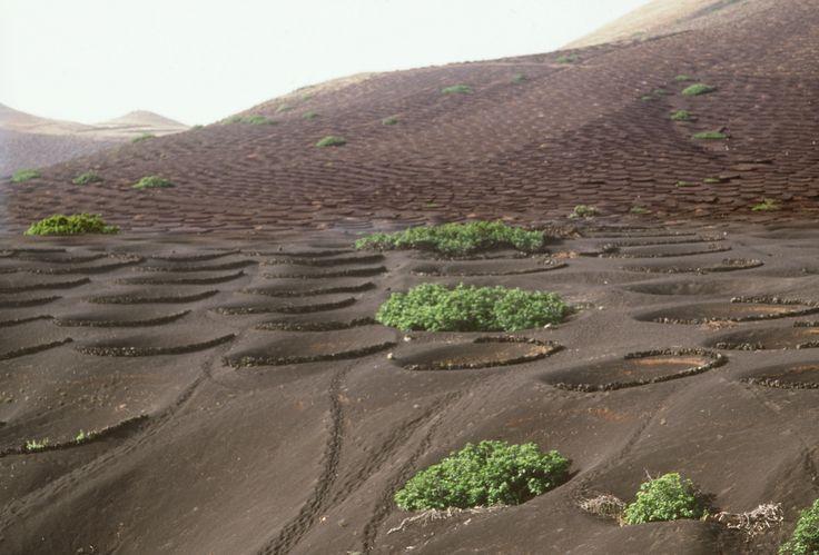 La erupción del Timanfaya que cubrió parte de Lanzarote de lava y cenizas en el siglo XVII propició una revolución agrícola que hoy se puede exportar a más zonas áridas.