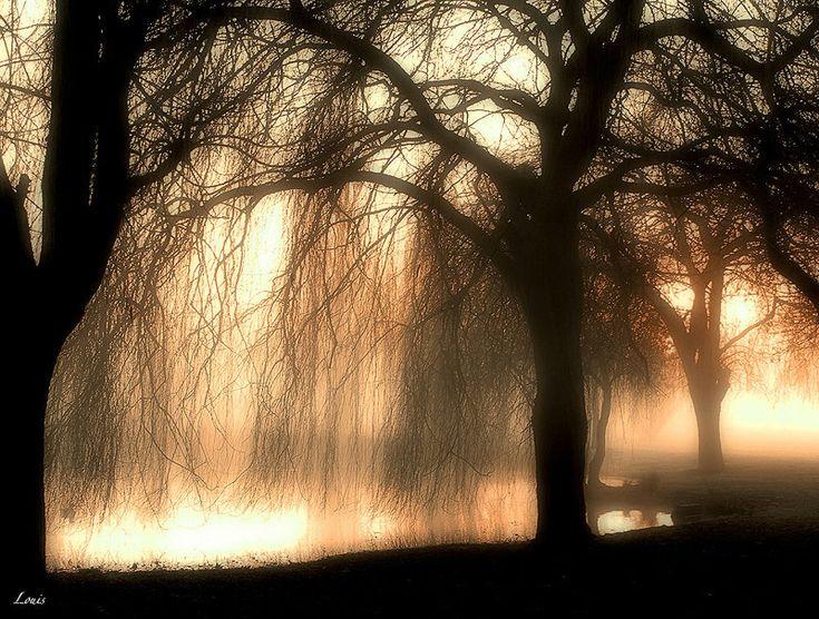 photo prise au petit matin a coté de Toulouse