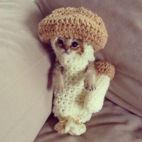 Kitten Wears a Mushroom Costume