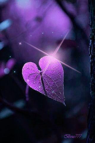 lilac leaf Gif. ATOS!