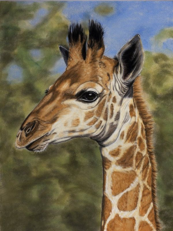 I'm the tallest by *Sarahharas07 on deviantART: Giraffes Giraffes, I M, Giraffes Art, Giraffes Fun Artsy