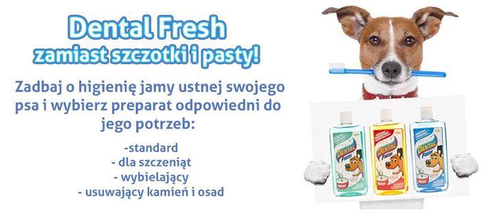 ✏ http://sklep.codlapsa.pl/pielegnacja-i-higiena/zeby Dental Fresh nie ma smaku ani zapachu, dodany do wody jest niewyczuwalny. Jest wygodny w stosowaniu, nie wymaga mechanicznego mycia zębów.