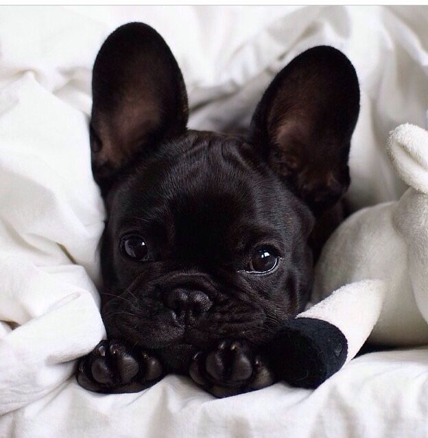 .Look at this beautiful Frenchie with his little baby. Love!