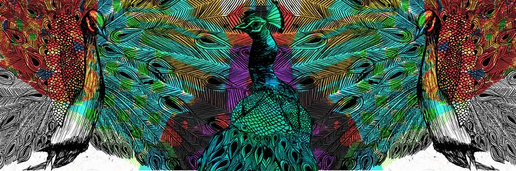 peacocks - Illustration