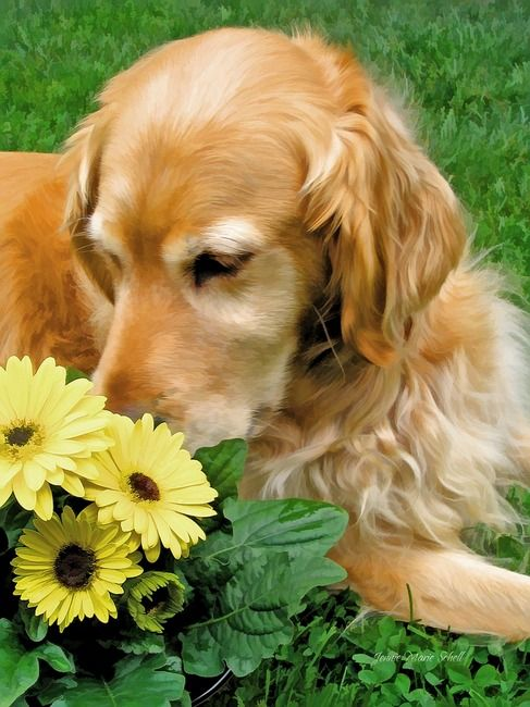 Stop and smell the flowers :)