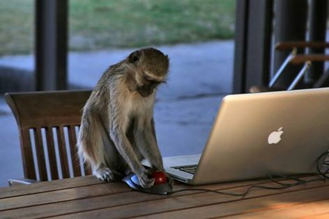 """Best not to leave a computer unattended, especially in the bush! So Kelly from Elephants Without Borders found out............. Caught this little rascal trying to learn on my computer... guess, I could use a new assistant to help me with the office work! """"Hey, lil' buddy... that's not a real Apple, its a Mac!"""""""