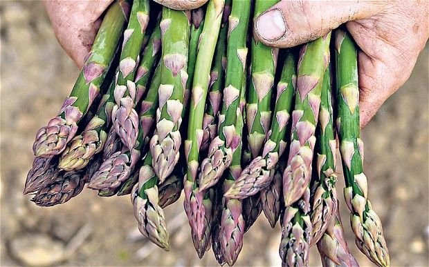 British Asparagus Festival 2012 cancelled due to lack of asparagus