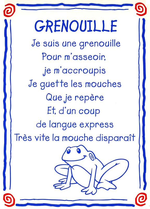 grenouille conseil
